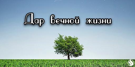 Дар вечной жизни